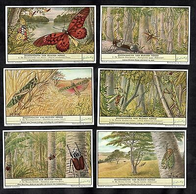 Giant Congo Insects Cards Set Liebig 1956 Butterfly Mantis Cigale Beetle Locust