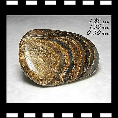 Carved Stromatolite Free-Form Nodule Minerals Carving