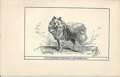 Named Fawn Pomeranian Dog Early 1900's Dog Print