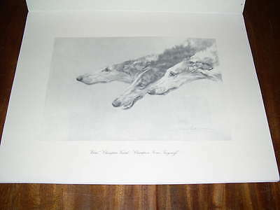 Very Rare Borzoi Russian Wolfhound Dog Book Limited Edition Maud Earl Illus