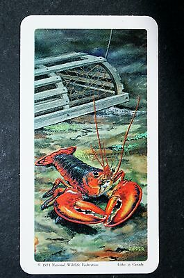 American Lobster     Illustrated Vintage Card    EXC