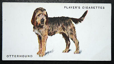 OTTERHOUND   Early 1930's Original Vintage Illustrated Card   VGC