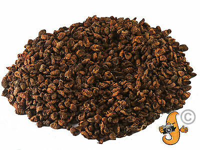 100g Dried Silkworm Pupae for Wild Birds Fish Koi Turtles Terrapin Food