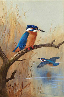 CHOP120 100% hand-painted modern birds Kingfisher oil painting wall art canvas