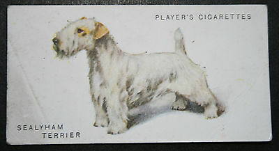 Sealyham Terrier     Original Early 1930's Vintage Colour Card  # VGC
