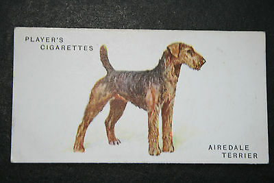 Airedale Terrier   Early 1930's  Vintage Colour Card