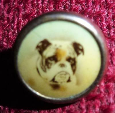 Antique lithograph button bulldog