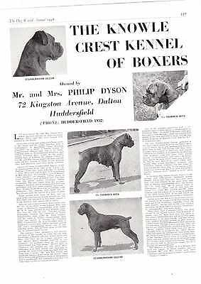 Boxer breed kennel clippings pedigree crufts x 50 dog showing working breed