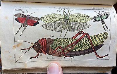 1810 RARE! 1st Ed G.T. Wilhelm INSECTS Vol.1  46 HC Copper Engraved Plates/376pp