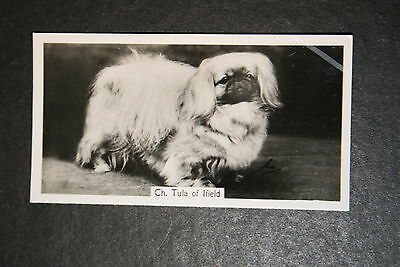 Pekingese  Show Champion  1930's Vintage Photo Card  VGC