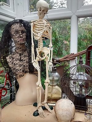 """Adam Rouilly half size human skeleton teaching aid 2' 9"""" / 85 cms tall medical"""