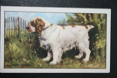 CLUMBER SPANIEL    Vintage Colour Card # VGC