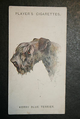 Kerry Blue Terrier   1920's Vintage Picture Card