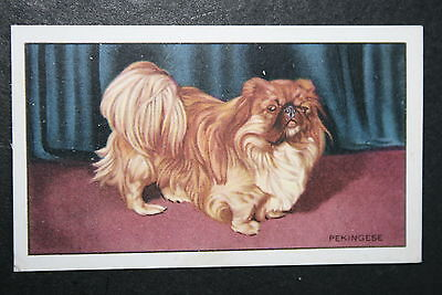 PEKINGESE     Original 1930's Vintage Illustrated Card  VGC