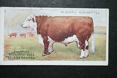 Hereford Cattle   Champion Bull   Original 1915 Vintage Picture Card