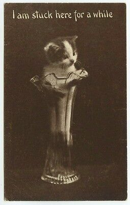 """Cat Postcard~Kitten in Tall Glass Flower Vase """"I Am Stuck here For A While"""" 1910"""
