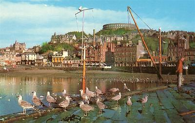 OBAN HARBOUR with seagulls Argyll and Bute Scotland old Postcard unused
