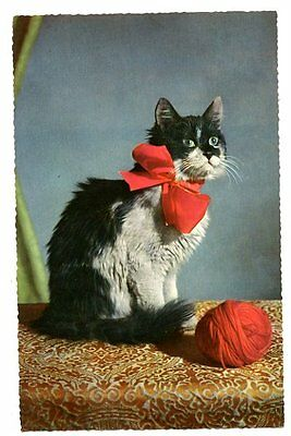 vintage cat postcard pretty black white tuxedo cat kitten big red bow ball wool
