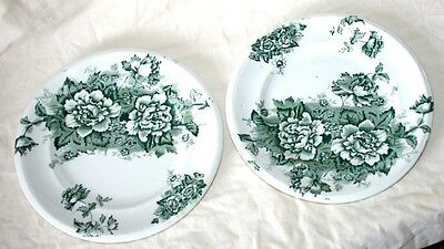 Antique Green Flowers & Leaves Sprays Dinner/Dessert Plates x 2, Pretty, Vgc