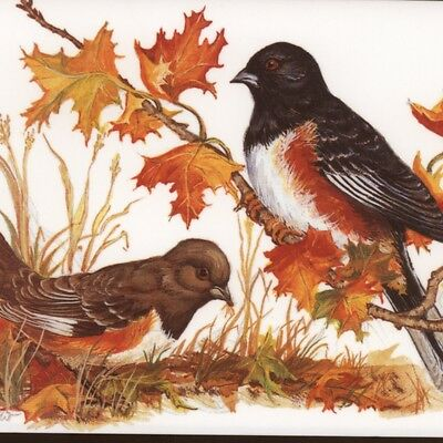 "Mint.! ""towhee"" Birds,maple Leaves,cornacchio,blank,vintage Greeting,note Card"
