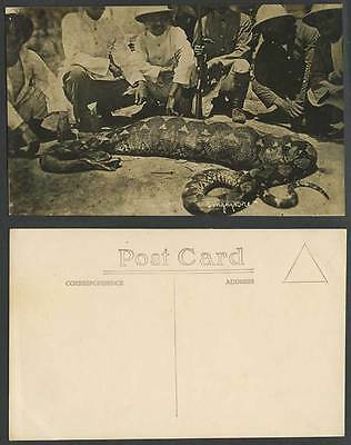 Singapore, Big Python SNAKE with Deer in STOMACH Hunters Old Real Photo Postcard
