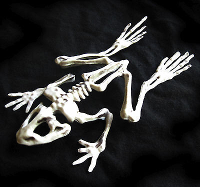 Frog Toad Skeleton Witchs Brew Haunted House Halloween Party Handheld Prop 8""