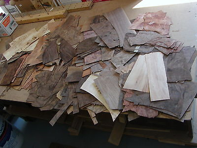 Exotic Wood And Burl Bargain Box, 13 Lbs, Marquetry, Inlay, Veneering, And More