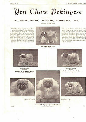 Pekingese breed kennel clippings pedigree crufts x 100 lot 1 dog showing