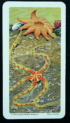 STARFISH    Illustrated Vintage Colour Card  #  EXC