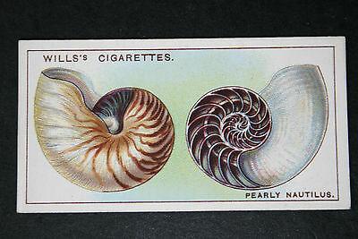 Pearly Nautilus   Original 1920's Vintage Illustrated Card   VGC