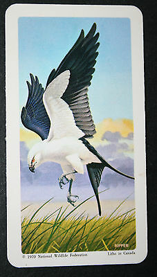 Swallow-tailed Kite     Illustrated Card   VGC