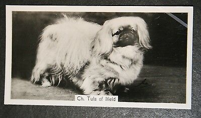 Pekingese  Show Champion  1930's Vintage Photo Card  # VGC