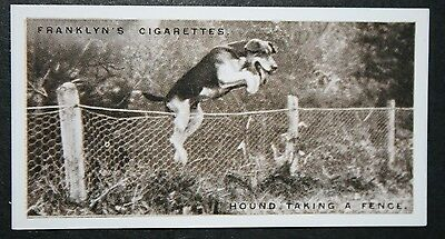 FOXHOUND    New Forest Foxhounds  Vintage  Photo Card  # EXC