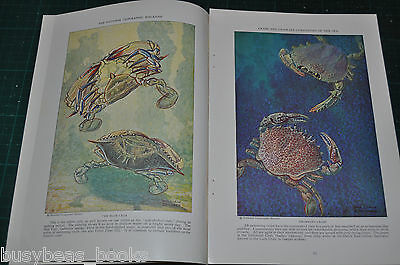 1928 magazine article about CRABS & Crablike sea creatures, color artwork