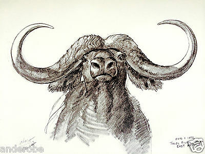 "1973 African CAPE BUFFALO B/W Framable ART PRINT by Ray HARM 11""x15"" L@@K"