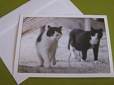 Alley Cat Allies blank notecard (free ship $20 min)