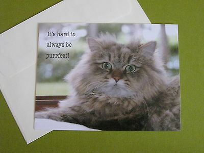 Current cat blank note card(free ship $20 min)