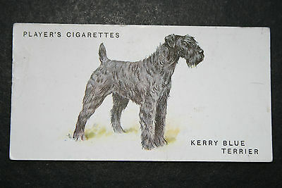 Kerry Blue Terrier   Early 1930's Original Vintage Illustrated Card