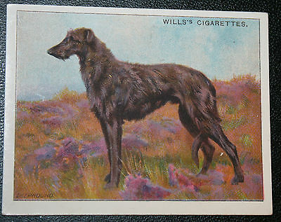 Scottish Deerhound     Original 1914 Vintage Illustrated Card  VGC