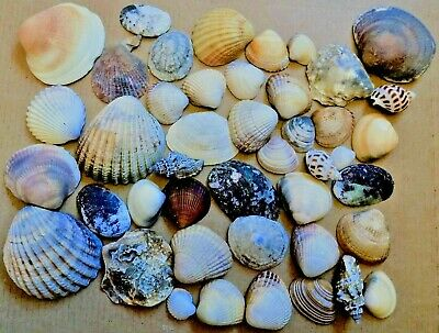Mixed Assorted Sea Shells Natural Beach Seashells Aquarium Decoration Craft 200g