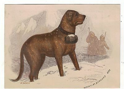 "VICTORIAN c1880."" ST.BERNARD DOG  CHROMOLITHO PRINT BY W.DICKES( WILLIAM DIKES)"