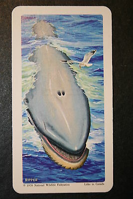 BLUE WHALE     Vintage Illustrated Card   VGC