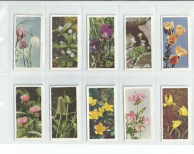 CAT £150.00 EXC+ BROOKE BOND 1955 SET 50......WILD FLOWERS A SERIES trade cards