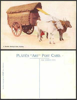 Ceylon c.1930 Plate ART Old Postcard A Double Bullock Cart Native Driver Cattle