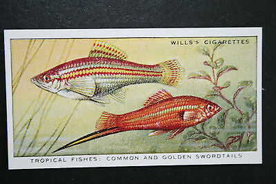 Swordtail Tropical Fish  Vintage Card  VGC / EXC