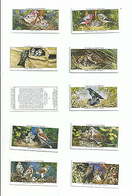 MINT JOHN PLAYER SET......BIRDS & THEIR YOUNG 2ND SERIES......cigarette cards
