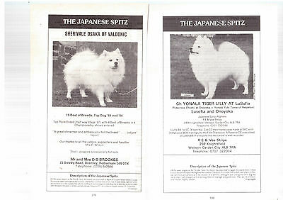 Japanese spitz breed kennel clippings pedigree crufts x 100 lot 1