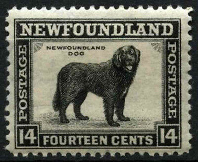 Newfoundland 1932 SG#216, 14c Black Dog MH #D44643