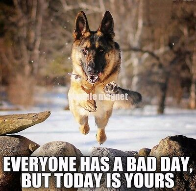 "German Shepherd Refrigerator Magnet 3.5"" x 3.5""  Bad Day"