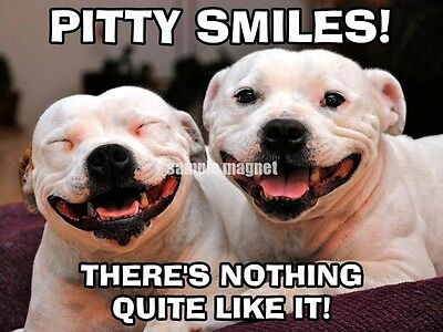 "Pit Bull Terrier Refrigerator Magnet 4"" x 3"" All Smiles"